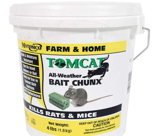 Get rid from Rat by using this poison